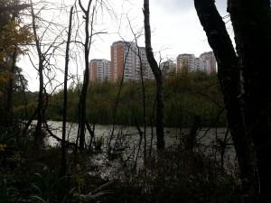 Московский осенний лес и грибы