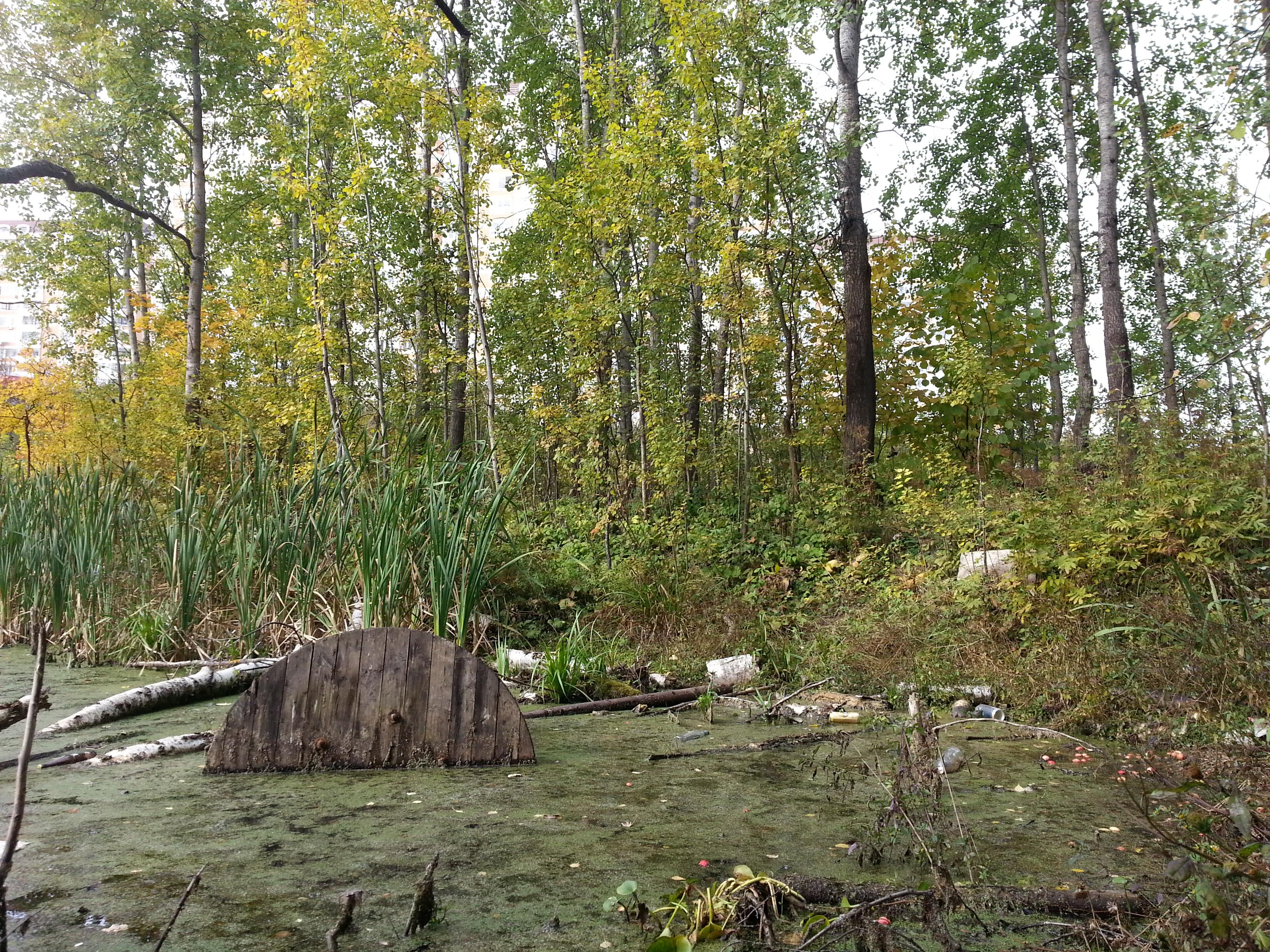 лес в новой москве